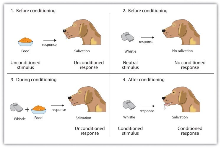 Classical Conditioning - The Pavlov's Dog (Picture source: http://catalog.flatworldknowledge.com)